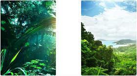 Джунгли живые обои ( Jungle Live Wallpaper )